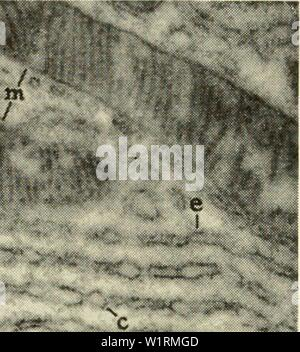 Archive image from page 71 of Cytology (1961) Stock Photo