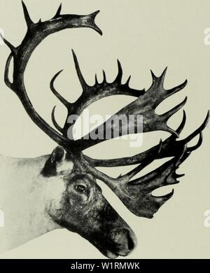 Archive image from page 71 of The deer of all lands; Stock Photo