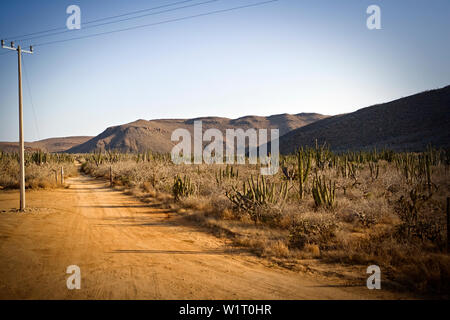 Remote dirt road in an arid landscape.