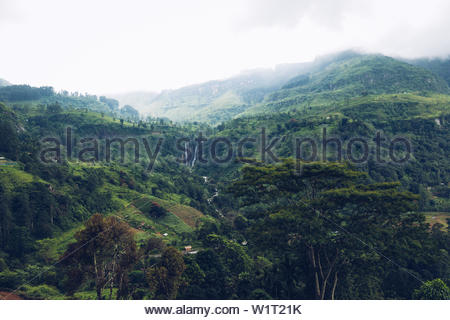 Tea-Plantage in Sri Lanka - Stock Photo