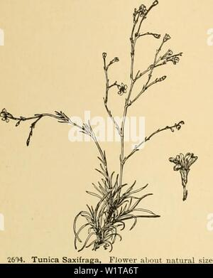 Archive image from page 458 of Cyclopedia of American horticulture - Stock Photo
