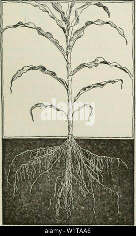 Archive image from page 458 of Cyclopedia of farm crops - Stock Photo