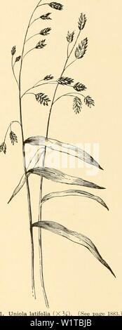 Archive image from page 467 of Cyclopedia of American horticulture - Stock Photo