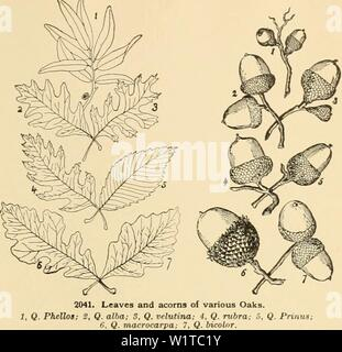 Archive image from page 470 of Cyclopedia of American horticulture - Stock Photo