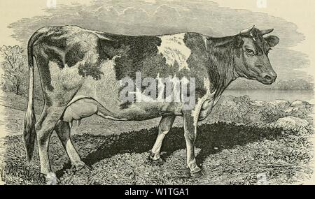 Archive image from page 482 of Dairy farming  being the Stock Photo