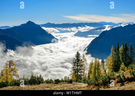 Larch trees in autumn colours with mood of fog above lake Achensee, Rofan and Karwendel in background, Seebergspitze, Karwendel range, Tyrol, Austria - Stock Photo