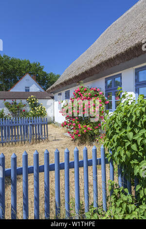 Thatched house in Neuendorf, Island Hiddensee, Baltic coast, Mecklenburg-Western Pomerania, Northern Germany, Germany, Europa - Stock Photo