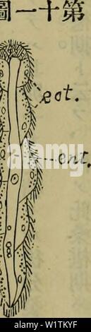 Archive image from page 492 of Dbutsugaku zasshi (1889) - Stock Photo