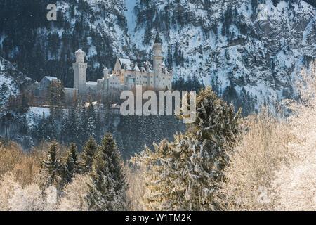 Schloss Neuschwanstein, Schwangau, Allgäu, Bayern, Deutschland - Stock Photo