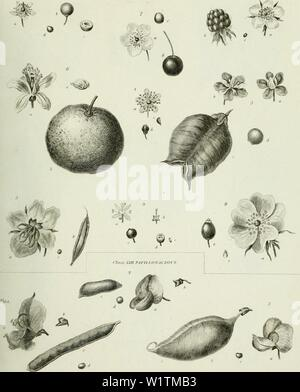 Archive image from page 492 of The cyclopaedia; or, Universal dictionary - Stock Photo