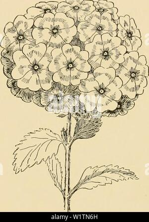 Archive image from page 496 of Cyclopedia of American horticulture - Stock Photo
