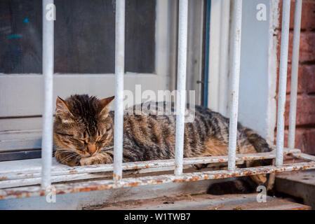 Cute and beautiful cat sitting, resting or sleeping on the window grid in Istanbul, Turkey. - Stock Photo