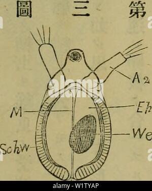 Archive image from page 530 of Dbutsugaku zasshi (1889) - Stock Photo