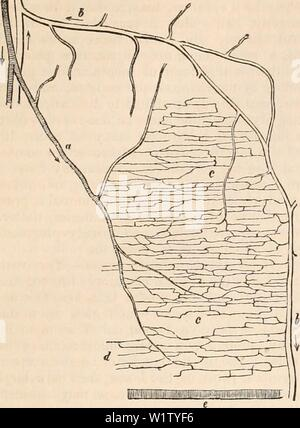Archive image from page 530 of The cyclopædia of anatomy and - Stock Photo