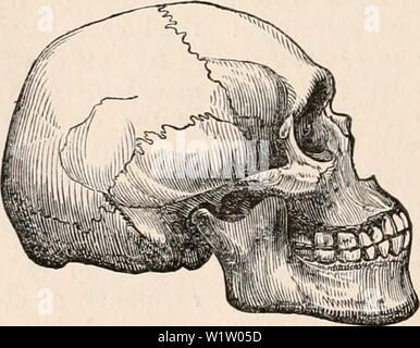 Archive image from page 535 of The cyclopædia of anatomy and. The cyclopædia of anatomy and physiology  cyclopdiaofana0402todd Year: 1849 - Stock Photo