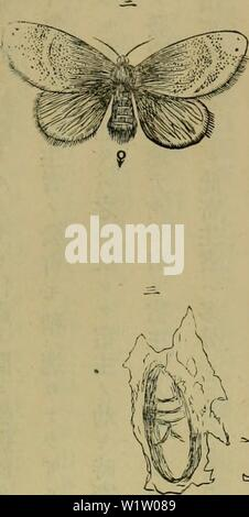 Archive image from page 536 of Dbutsugaku zasshi (1889) - Stock Photo