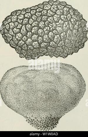 Archive image from page 536 of Cyclopedia of farm crops - Stock Photo