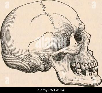 Archive image from page 538 of The cyclopædia of anatomy and. The cyclopædia of anatomy and physiology  cyclopdiaofana0402todd Year: 1849 - Stock Photo