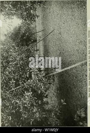 Archive image from page 539 of Cyclopedia of farm crops . Cyclopedia of farm crops : a popular survey of crops and crop-making methods in the United States and Canada  cyclopediaoffarm00bailuoft Year: 1922, c1907 - Stock Photo