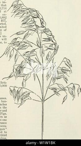 Archive image from page 546 of Cyclopedia of farm crops - Stock Photo