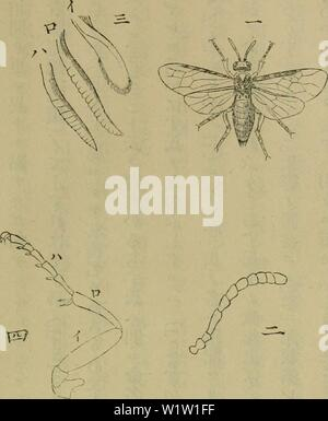 Archive image from page 546 of Dbutsugaku zasshi (1889) - Stock Photo