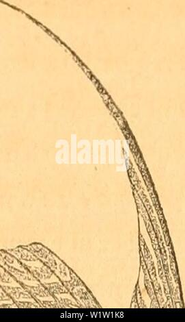 Archive image from page 546 of Danmarks fiske (1838) - Stock Photo
