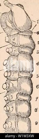 Archive image from page 563 of The cyclopædia of anatomy and - Stock Photo