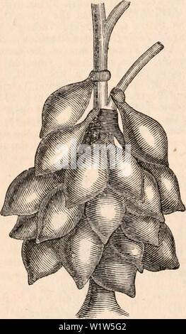 Archive image from page 575 of The cyclopædia of anatomy and - Stock Photo
