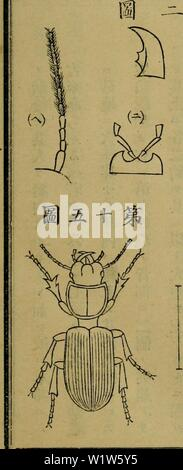 Archive image from page 580 of Dbutsugaku zasshi (1889) - Stock Photo