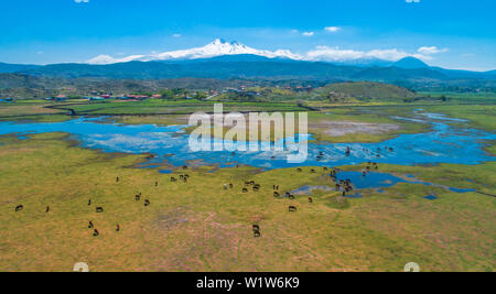 Wild and free yilki horses herd top view aerial overhead drone photo in front of Erciyes Mountain Kayseri Turkey at wetland and marshes. - Stock Photo