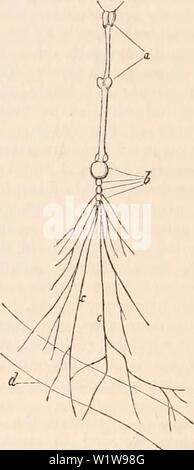 Archive image from page 623 of The cyclopædia of anatomy and - Stock Photo