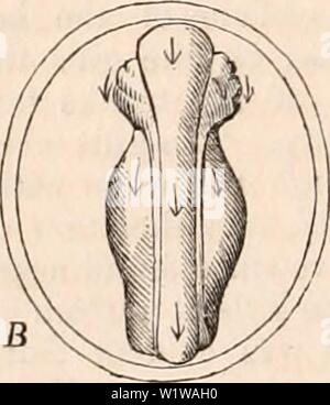 Archive image from page 645 of The cyclopædia of anatomy and - Stock Photo