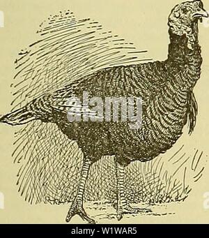 Archive image from page 650 of Cyclopedia of farm animals (1922) - Stock Photo