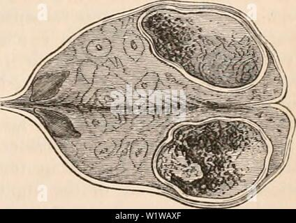 Archive image from page 650 of The cyclopædia of anatomy and - Stock Photo