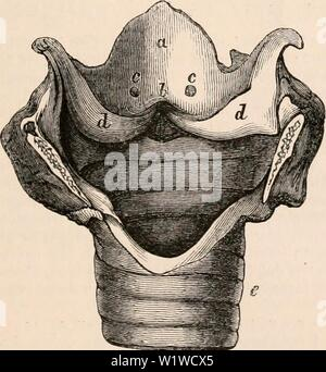 Archive image from page 708 of The cyclopædia of anatomy and - Stock Photo