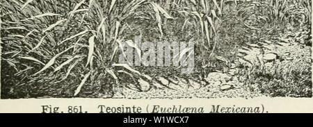 Archive image from page 708 of Cyclopedia of farm crops - Stock Photo