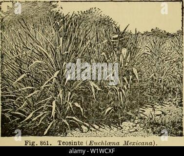 Archive image from page 708 of Cyclopedia of farm crops (1922) - Stock Photo