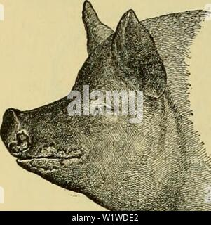 Archive image from page 727 of Cyclopedia of farm animals (1922) - Stock Photo