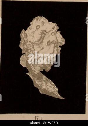 Archive image from page 758 of Denkschriften - Österreichische Akademie der. Denkschriften - Ãsterreichische Akademie der Wissenschaften  denkschriftens951918akad Year: 1850 â w - Stock Photo