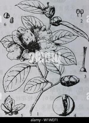 Archive image from page 775 of da bie shan zhi wu - Stock Photo