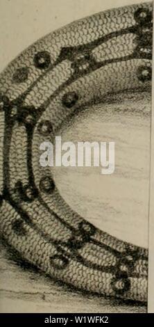 Archive image from page 856 of Denkschriften der Koniglichen Akademie der - Stock Photo