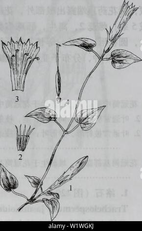 Archive image from page 922 of da bie shan zhi wu - Stock Photo