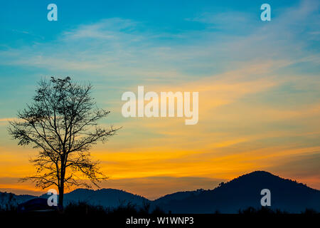 The morning sun light behind the mountains and the tree. - Stock Photo