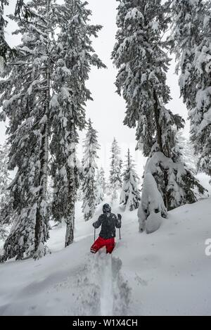 Young man running through deep snow, hiking in winter, deep snow in the forest, Brixen im Thale, Tyrol, Austria, Europe - Stock Photo