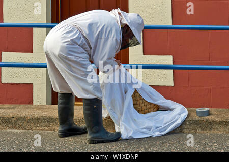 BEE SWARM BEEKEEPER COLLECTING THE SKEP AND BEES WITH THE LARGE WHITE SHEET - Stock Photo