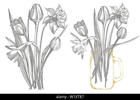 Tulips and Narcissus flowers bouquet isolated on white background. Set of drawing cornflowers, floral elements, hand drawn botanical illustration - Stock Photo