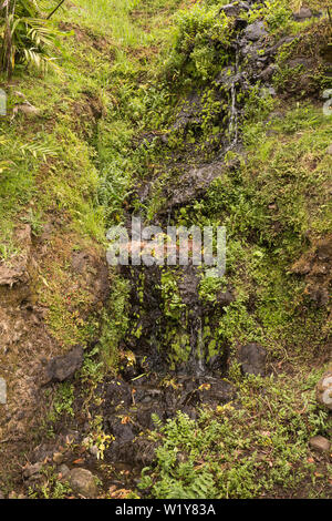 Fresh green color of the vegetation, which includes also generic plants. Nature park with a waterfall in Nordeste, Sao Miguel, Azores Islands, Portuga - Stock Photo