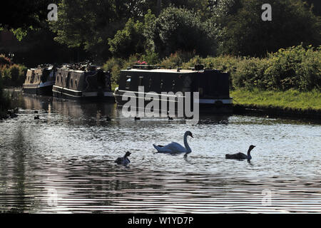 Evening on the canal. A strong evening sun makes for a bit of a monochromatic image of canal boats and wildfowl on the T and M canal near Handsacre. - Stock Photo