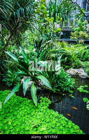 Beautiful garden with pond and fishes. - Stock Photo