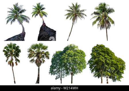 Isolated coconut trees and Palm trees on a white background with clipping path. - Stock Photo